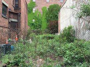 Vacant Green Lot
