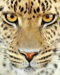 Jaguar by KomodoEmpire