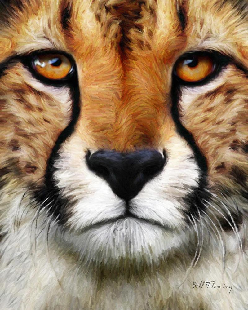 Cheetah by KomodoEmpire