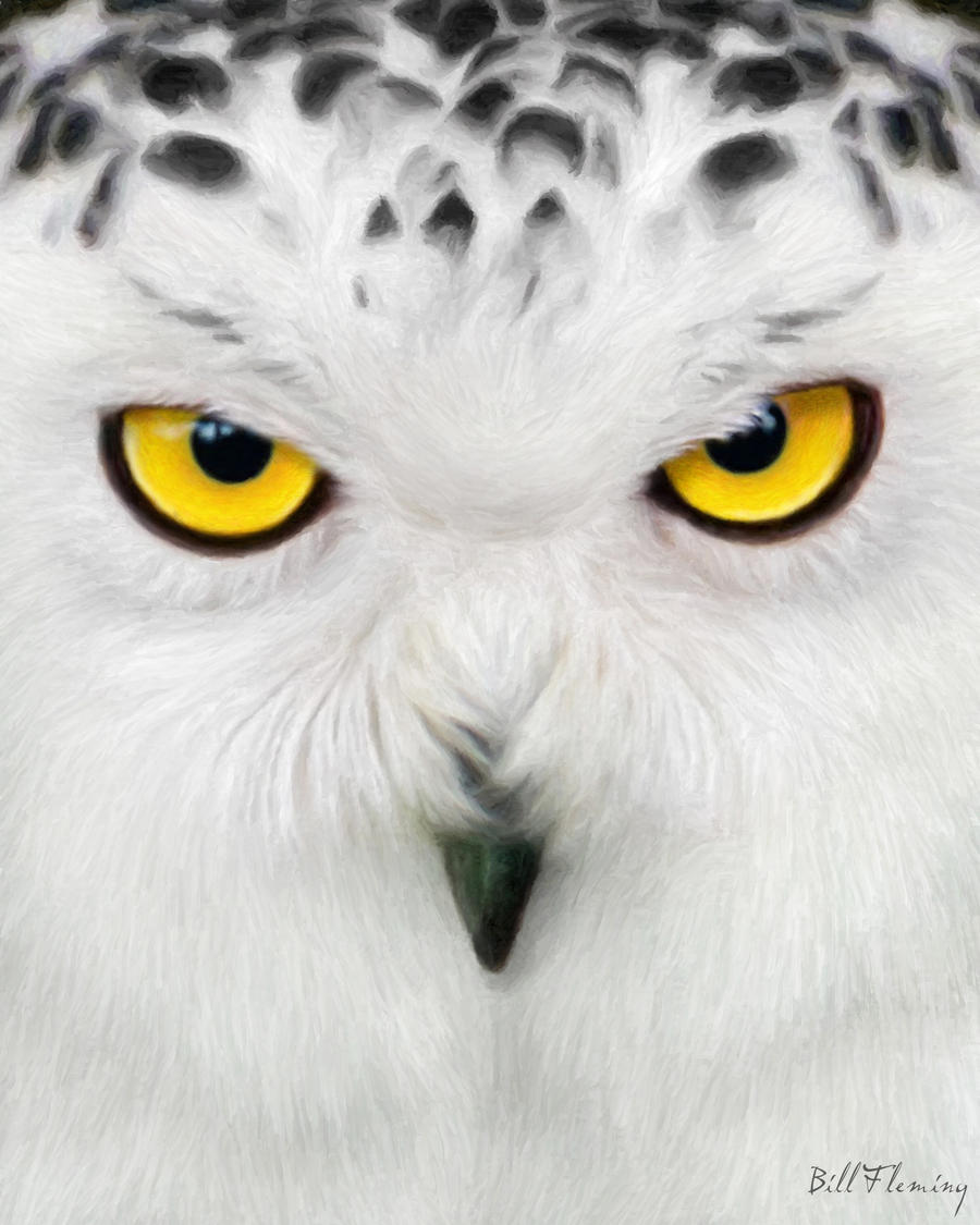Snowy Owl by KomodoEmpireOwl Eyes Paintings
