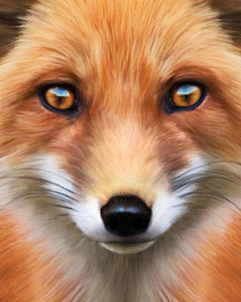 Red Fox by KomodoEmpire