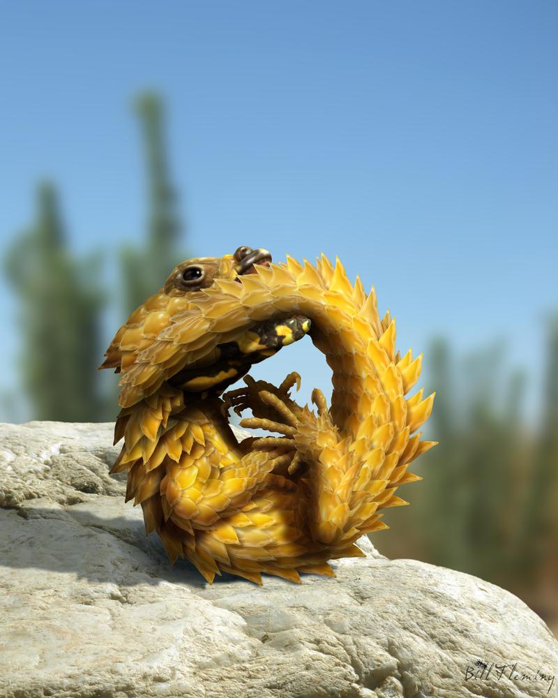 Armadillo lizard wallpaper - photo#20