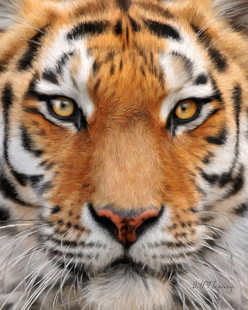 Tiger: Bengal Tiger Eye Close Up