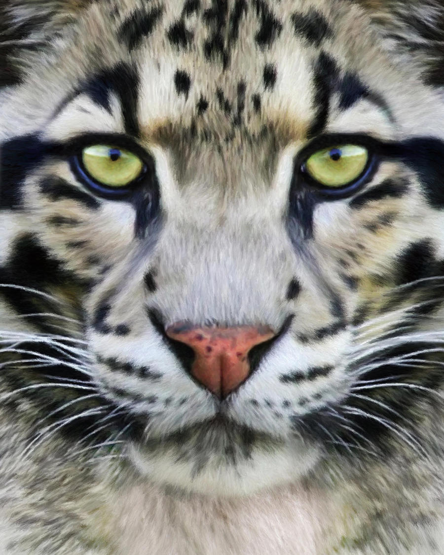 how to draw a clouded leopard face