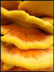 Tree-mushroom close-up