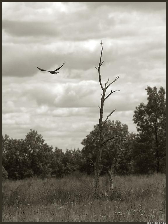 Raven by spirik