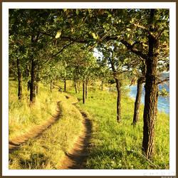 Oak alley by spirik
