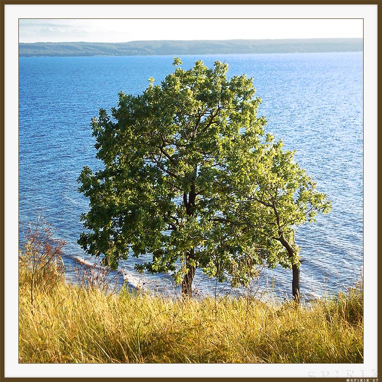 Oak tree by spirik