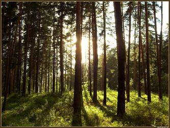 Forest full by spirik