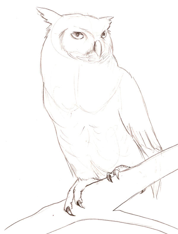 Great Horned Owl Sketch By Theroyalfrog On Deviantart