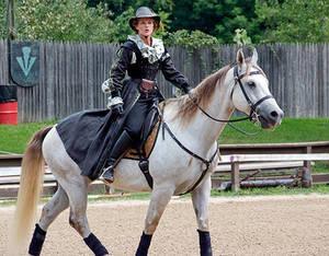 A Ladies Horse