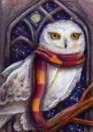 Hedwig in the Owlery