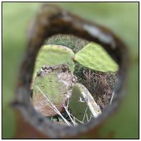 Through the green keyhole