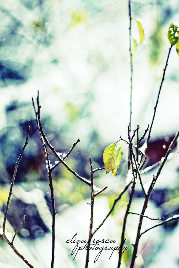 Winter by elizarosca