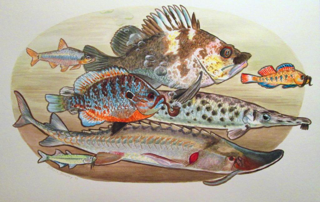 Kansas Fish by iesnoth