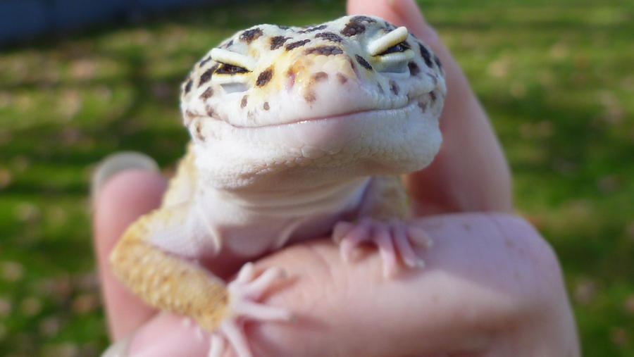 Happy Lizard Tumblr