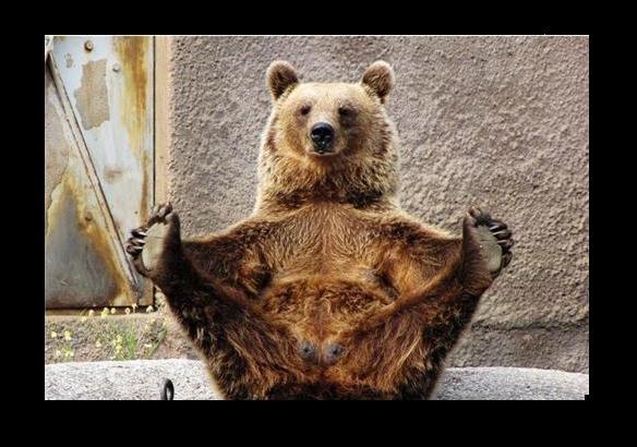 Lol Bear LOL bear 2 by