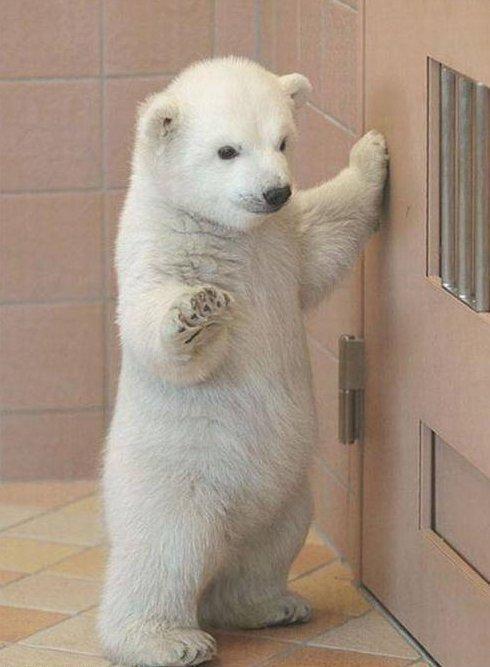 Baby Ice Bear by Icanhascheezburger24 on DeviantArt