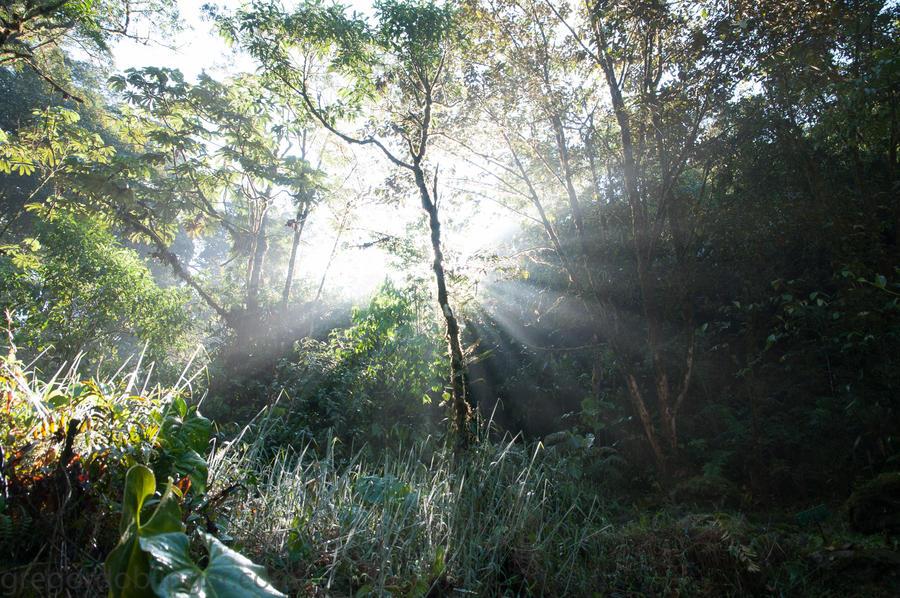 daydreams - clodbridgegarden I by inkoginko