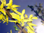 insekts in the spring
