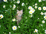 Tagritte in the flowers by Cansounofargentina