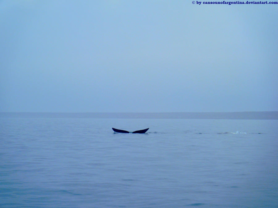 Southern Right Whale - caudal fin IV by Cansounofargentina