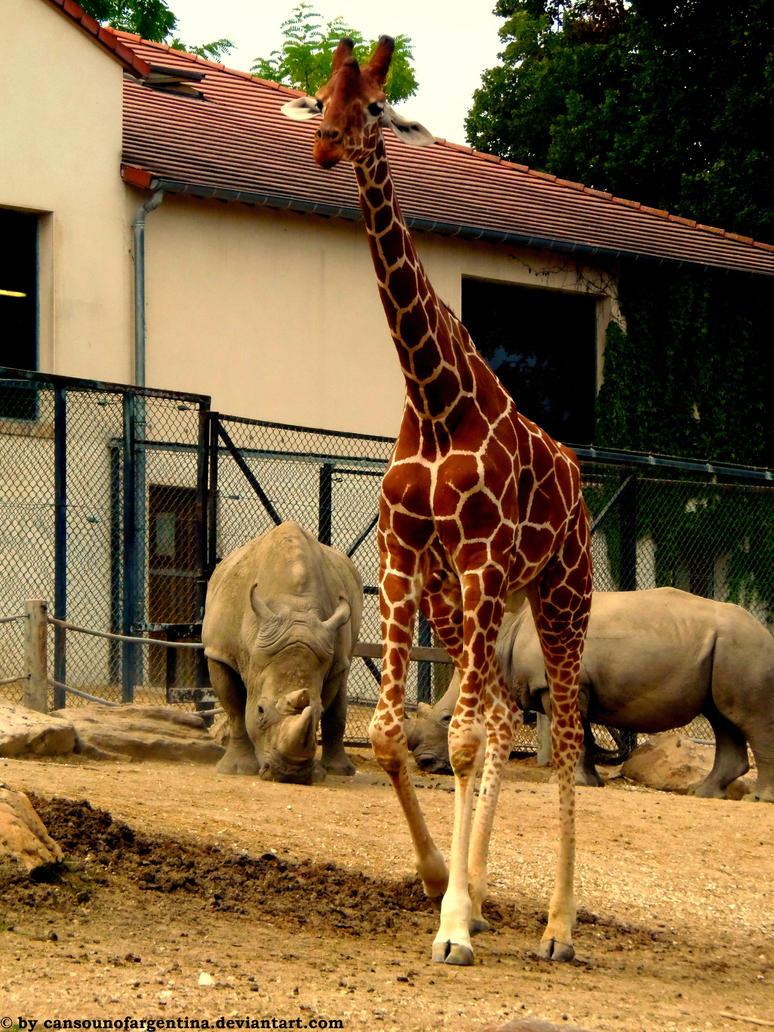 Giraffe and Rhinoceros by Cansounofargentina