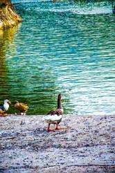 Wonder lake by redkiler