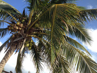 Palm Tree by multifandomed25