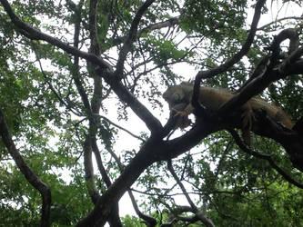 Iguana in Tree by multifandomed25