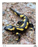 Salamander by paloma-palomino