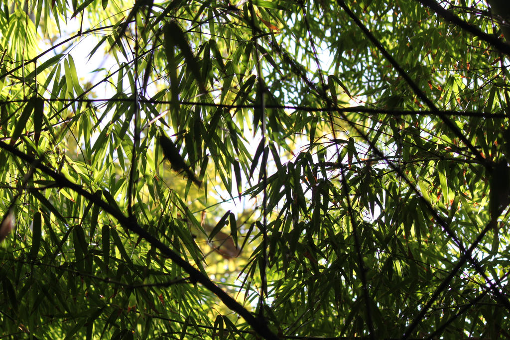 00318 - Backlit Bamboo Leaves by emstock