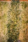 00316 - Algae Covered Stone II