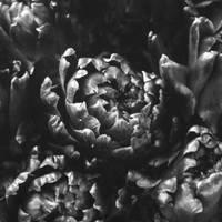 Shallow. by mylittlebluesky