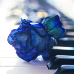 Blues. by mylittlebluesky