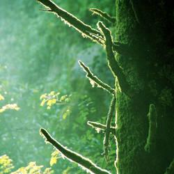 The secret forest. by mylittlebluesky