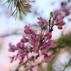 Spring postcard II by mylittlebluesky