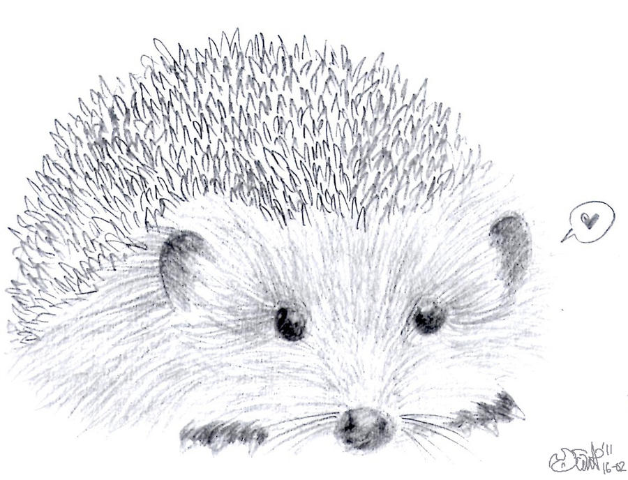 Line Drawing Hedgehog : Hedgehog sketch by inyaa on deviantart
