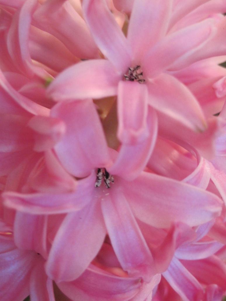 Pretty Pink Flower | www.imgkid.com - The Image Kid Has It!
