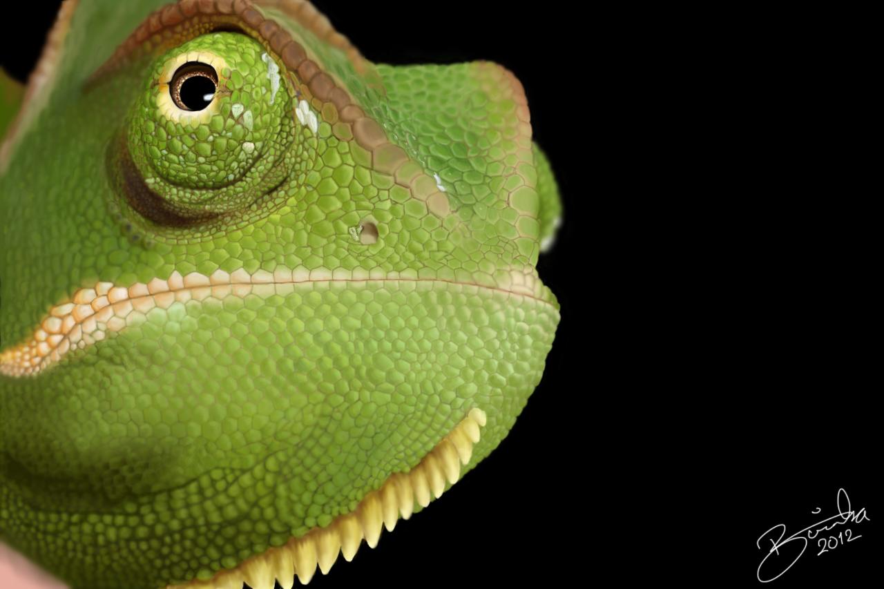 Veiled Chameleon by LucaDeBoa