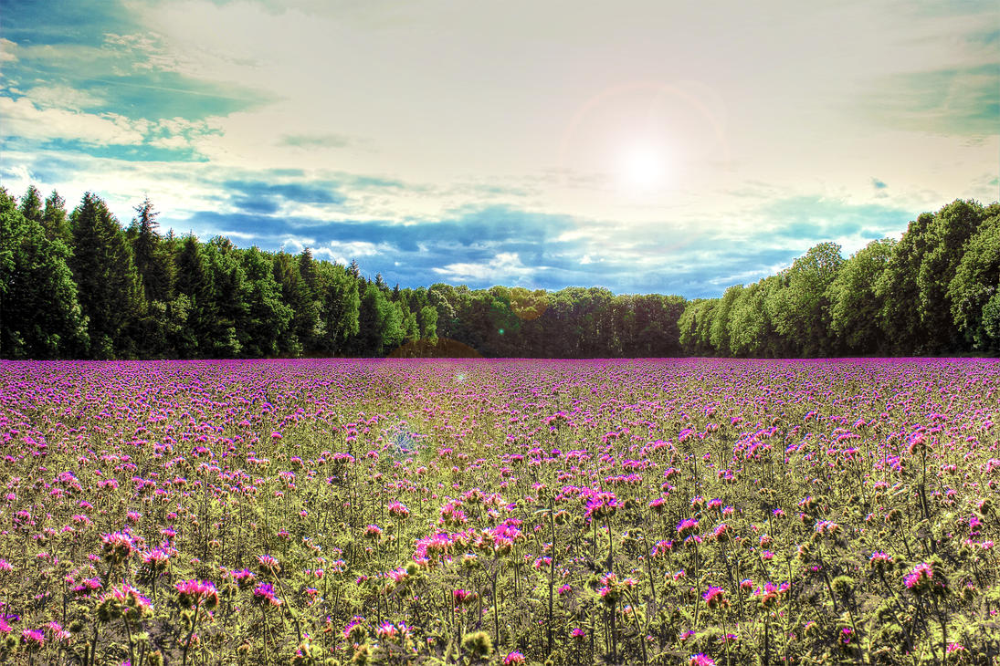Field behind my house HDR by LucaDeBoa