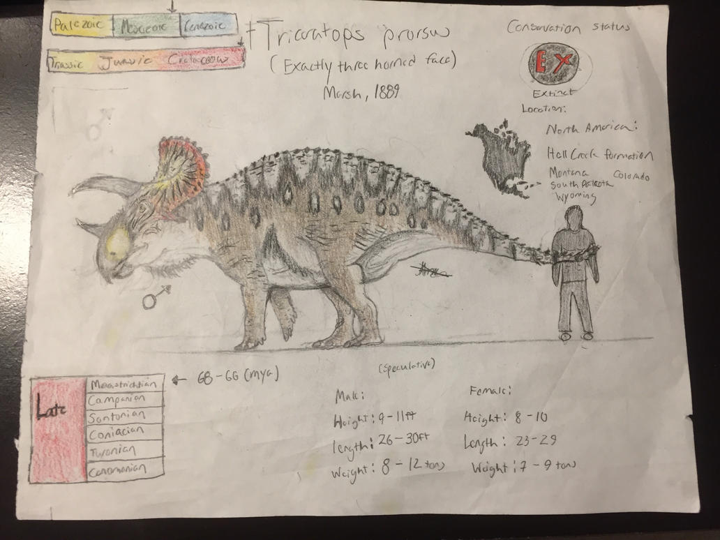 Triceratops prorsus (male) by CoelurosaurianArtist