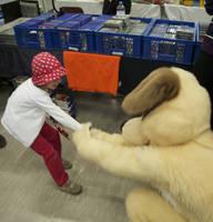 Dog at play