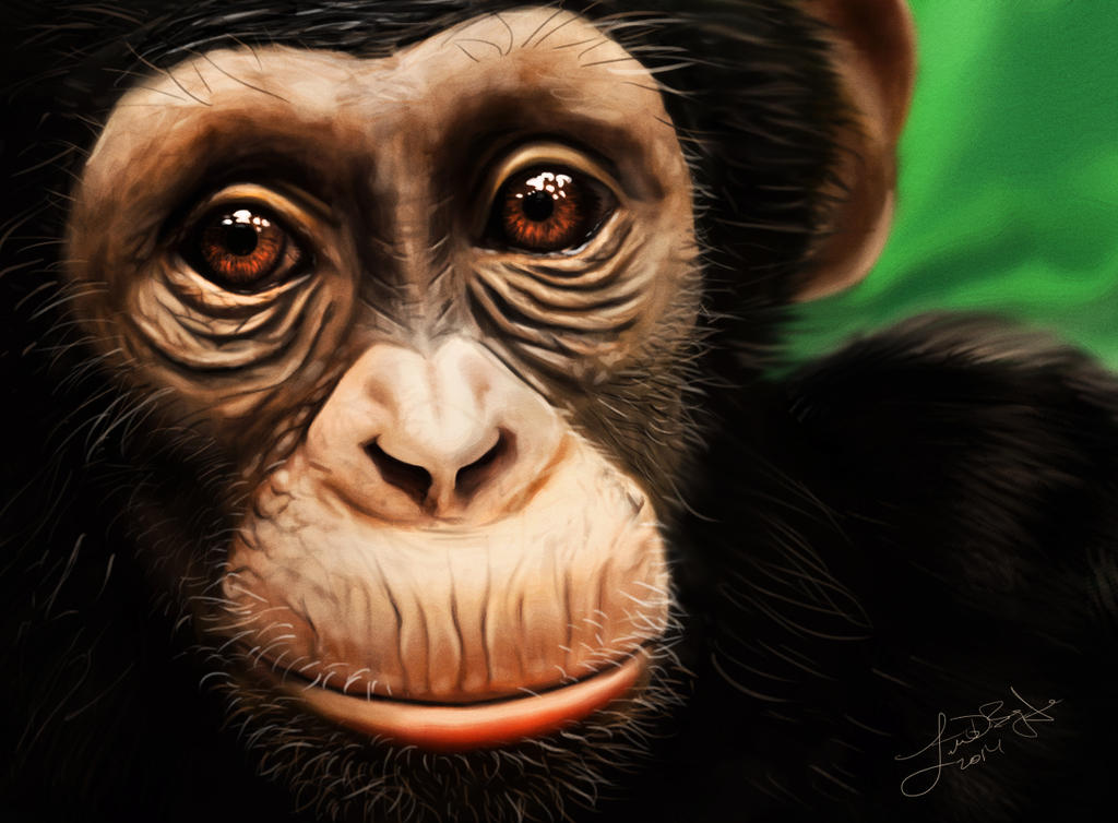 Chimp by lberry1976