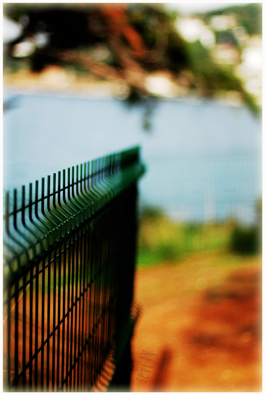 green by sevCANN