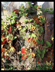 Flower Covered Fence