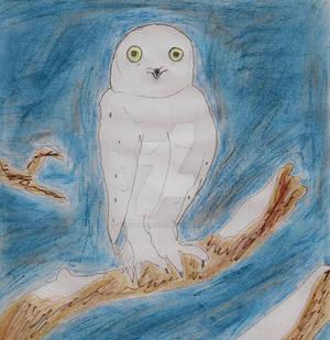 Snowly the snow owl
