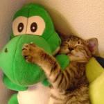 Yoshi and Matute
