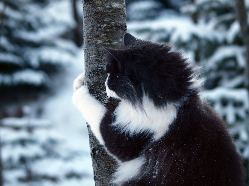 My panda cat by maialonn