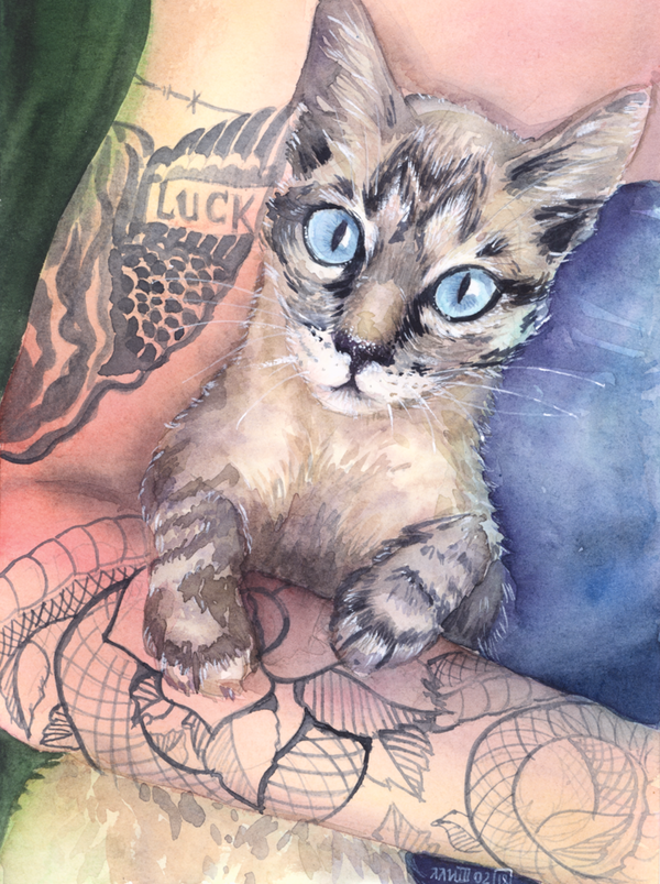 Cat  Study by Olevelaya